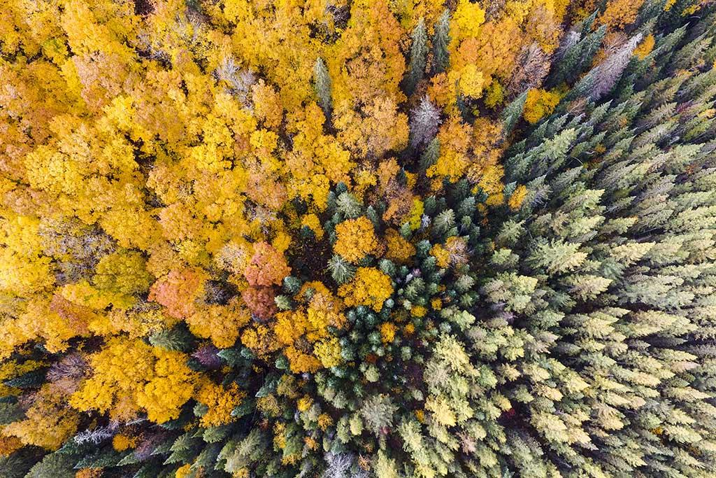 Autumn Colours Drone